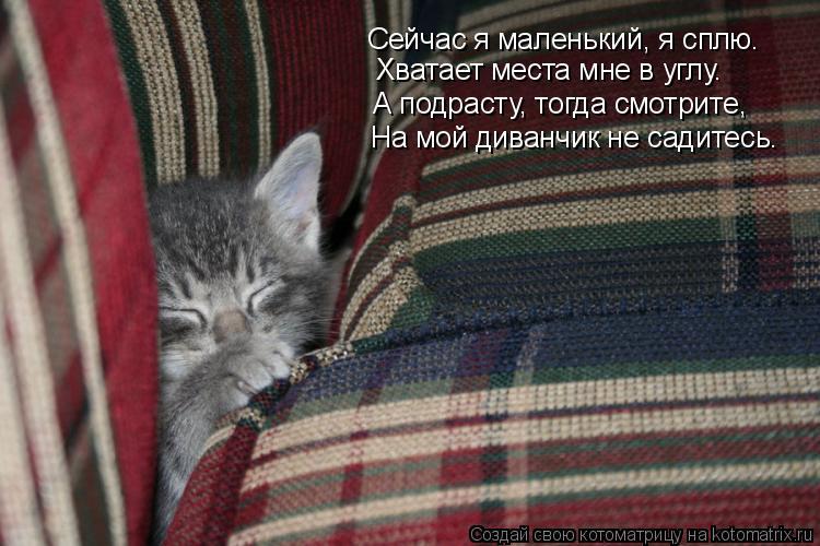 Котоматрица: Сейчас я маленький, я сплю.  Хватает места мне в углу. А подрасту, тогда смотрите, На мой диванчик не садитесь.