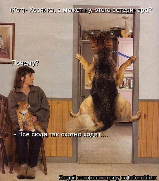 Котоматрица: (Кот)- Хозяйка, а может ну, этого ветеринара? - Почему? - Все сюда так охотно ходят....