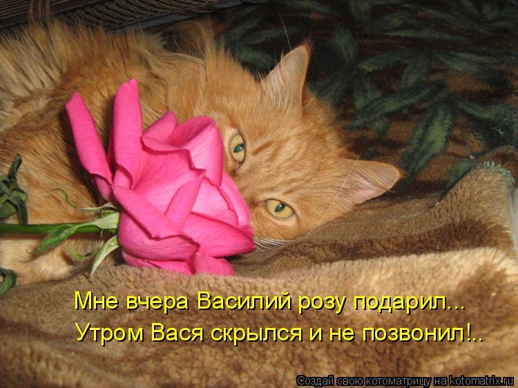 Котоматрица: Мне вчера Василий розу подарил... Утром Вася скрылся и не позвонил!..