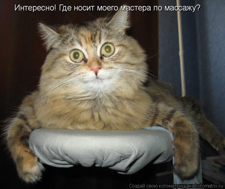 Котоматрица: Интересно! Где носит моего мастера по массажу?