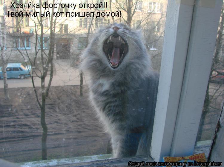 Котоматрица: Хозяйка,форточку открой!! Твой милый кот пришел домой!