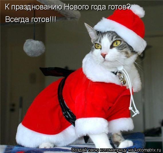 Котоматрица: К празднованию Нового года готов? Всегда готов!!!