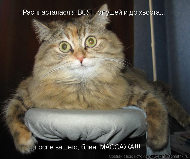 Котоматрица: - Распласталася я ВСЯ - от ушей и до хвоста... ...после вашего, блин, МАССАЖА!!!