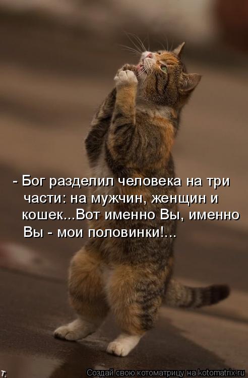Котоматрица: - Бог разделил человека на три  части: на мужчин, женщин и  кошек...Вот именно Вы, именно Вы - мои половинки!...