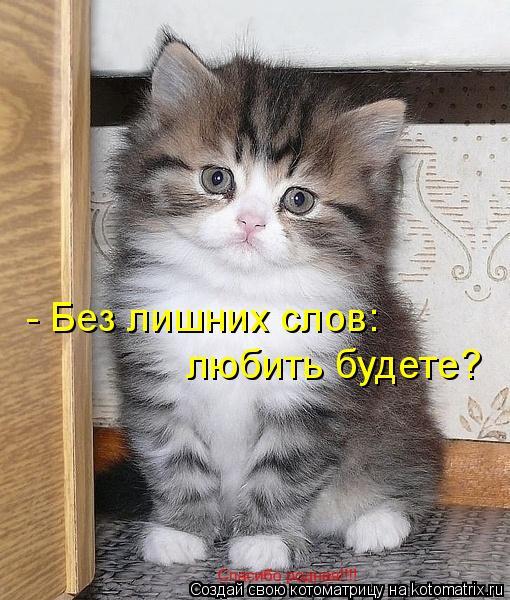 Котоматрица: - Без лишних слов: любить будете?