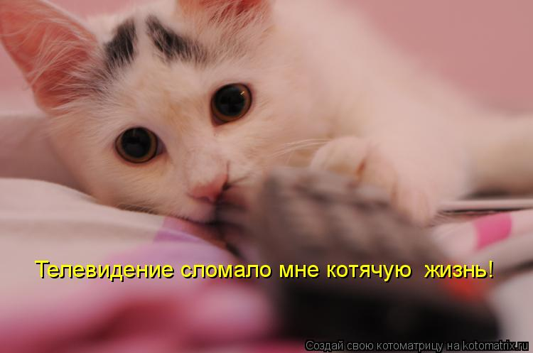Котоматрица: Телевидение сломало мне котячую  жизнь!