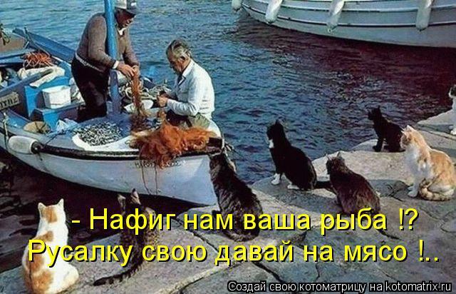 Котоматрица: - Нафиг нам ваша рыба !? Русалку свою давай на мясо !..