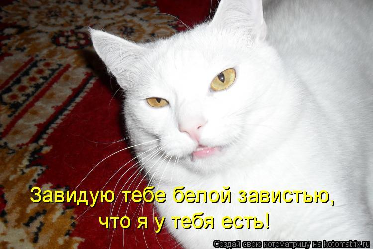 Котоматрица: Завидую тебе белой завистью,  что я у тебя есть!