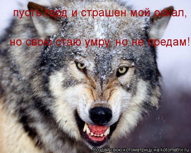 Котоматрица: пусть горд и страшен мой оскал, но свою стаю умру, но не предам!