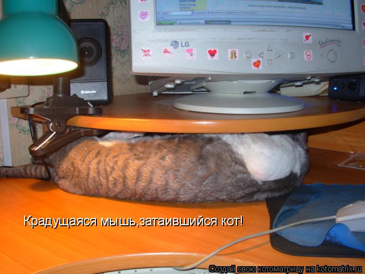 Котоматрица: Крадущаяся мышь,затаившийся кот!