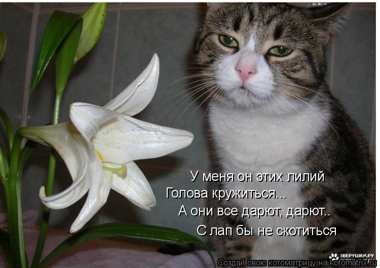 Котоматрица: У меня он этих лилий Голова кружиться... А они все дарют, дарют.. С лап бы не скотиться