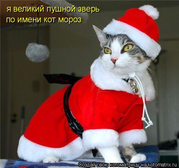 Котоматрица: я великий пушной зверь по имени кот мороз