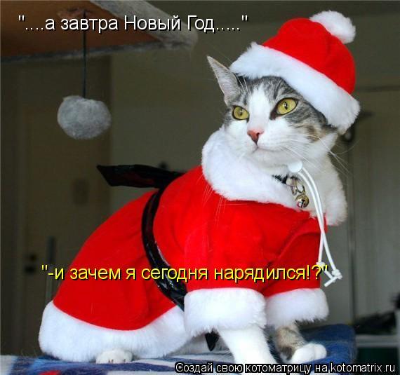"""Котоматрица: """"....а завтра Новый Год....."""" """"-и зачем я сегодня нарядился!?"""""""