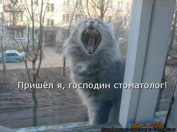 Котоматрица: Пришёл я, господин стоматолог!