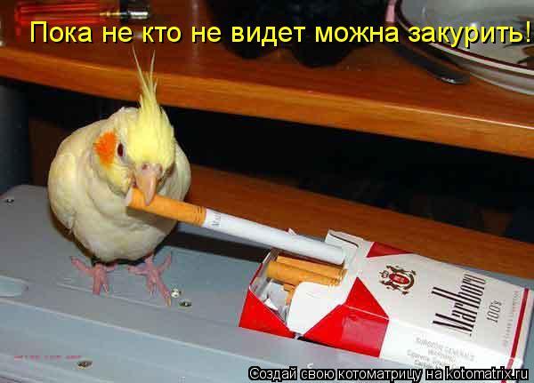 Котоматрица: Пока не кто не видет можна закурить!