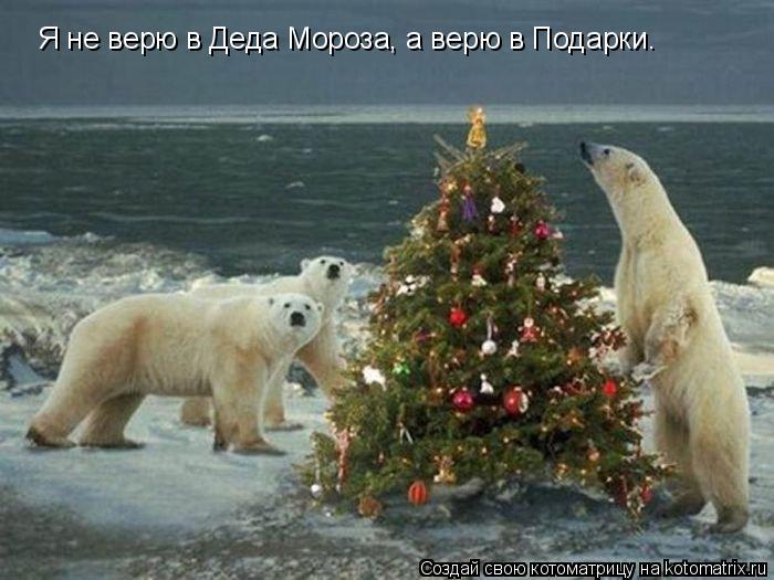 Котоматрица: Я нe вeрю в Дeдa Морозa, a вeрю в Подaрки.
