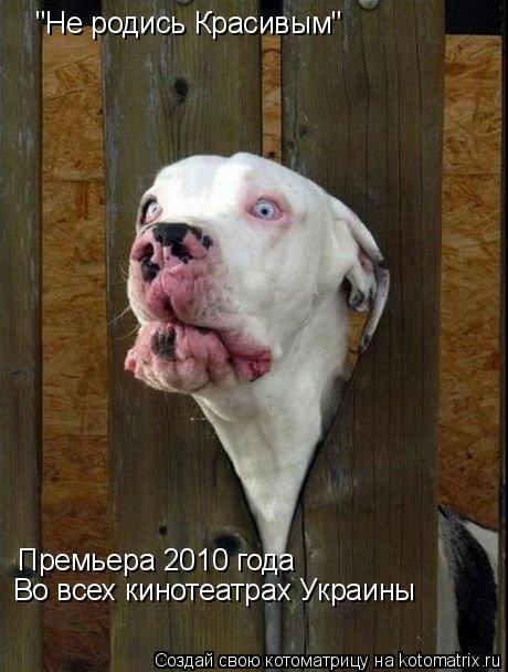 """Котоматрица: """"Не родись Красивым"""" Премьера 2010 года Во всех кинотеатрах Украины"""