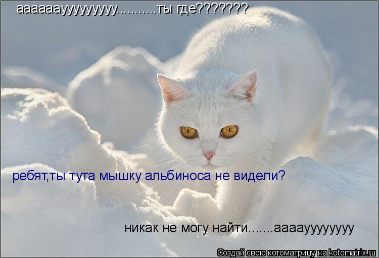 Котоматрица: ааааааууууууууу...........ты где??????? ребят,ты тута мышь альбиноса не видели?никак не могу  найти! ребят,ты тута мышку альбиноса не видели? никак