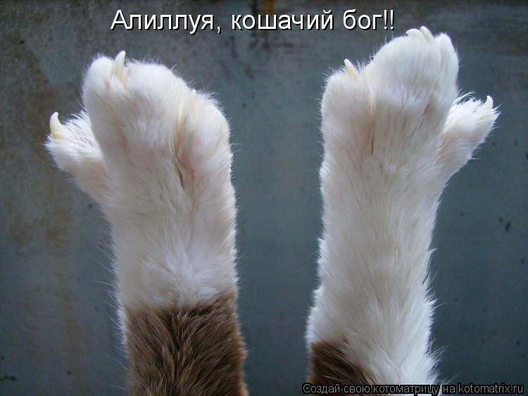 Котоматрица: Алиллуя, кошачий бог!!