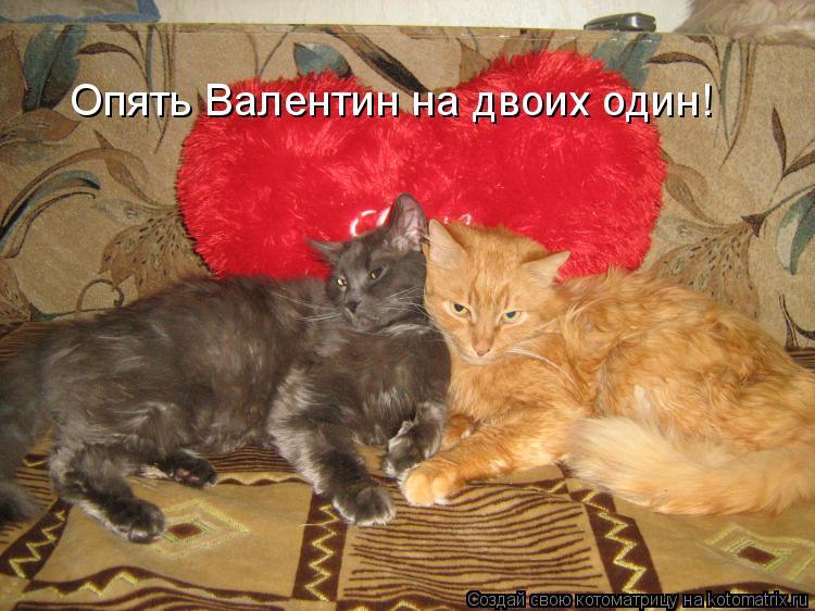 Котоматрица: Опять Валентин на двоих один!