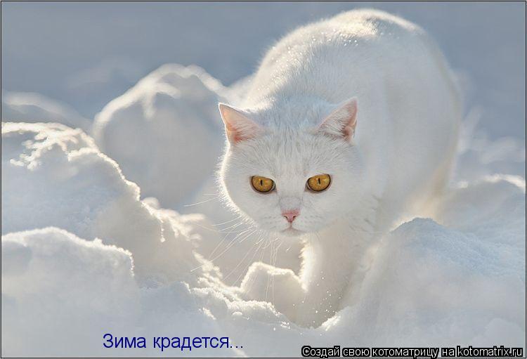 Котоматрица: Зима крадется...