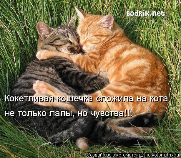 Котоматрица: Кокетливая кошечка сложила на кота  не только лапы, но чувства!!!