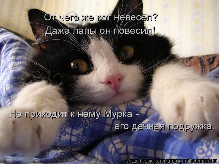Котоматрица: От чего же кот невесел? Даже лапы он повесил! Не приходит к нему Мурка - его дачная подружка.