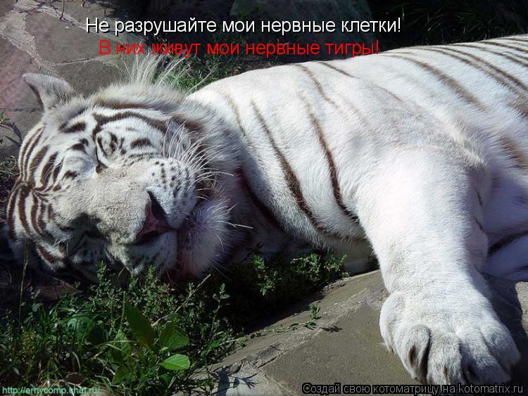 Котоматрица: Не разрушайте мои нервные клетки!  В них живут мои нервные тигры!