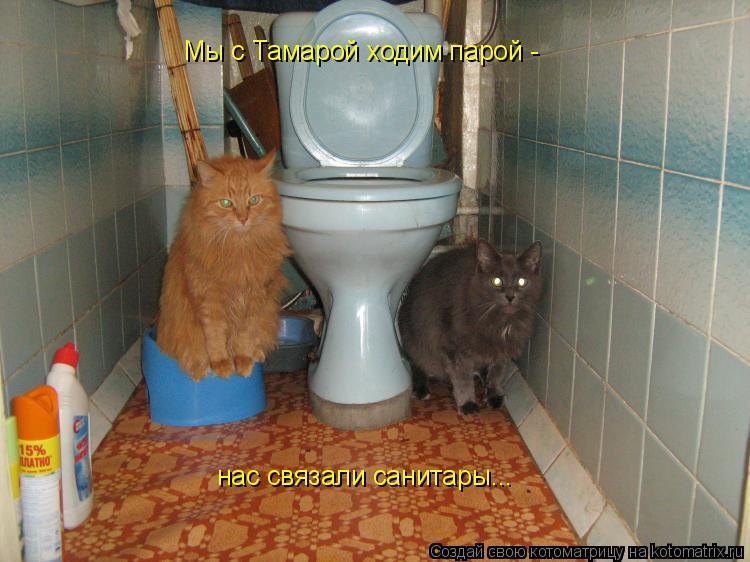 Котоматрица: Мы с Тамарой ходим парой - нас связали санитары...