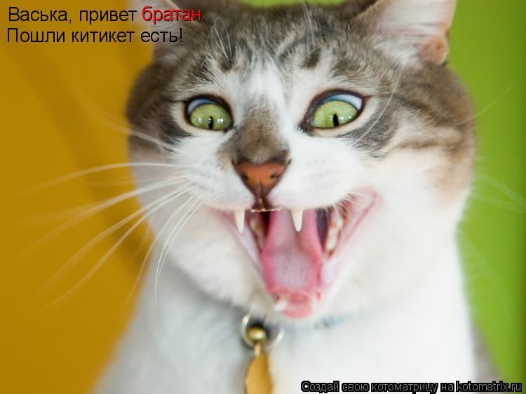 Котоматрица: Васька, привет братан.  Пошли китикет есть! братан