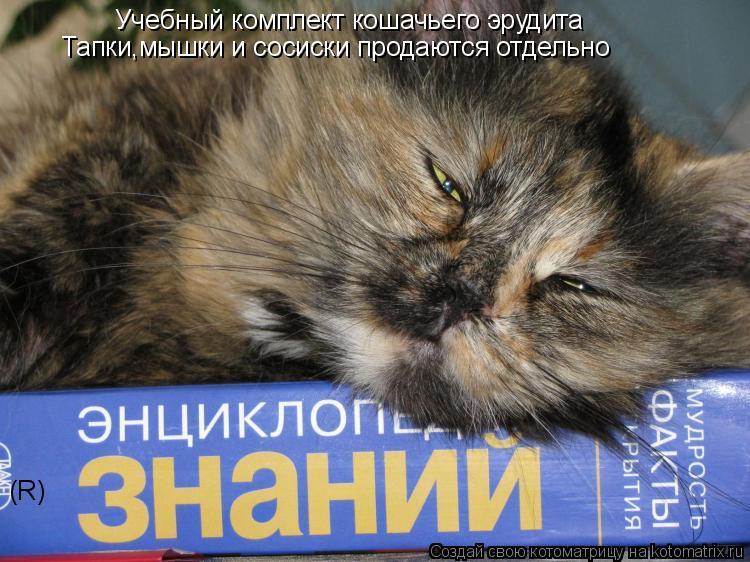 Котоматрица: Учебный комплект кошачьего эрудита Тапки,мышки и сосиски продаются отдельно R R                                  (R)