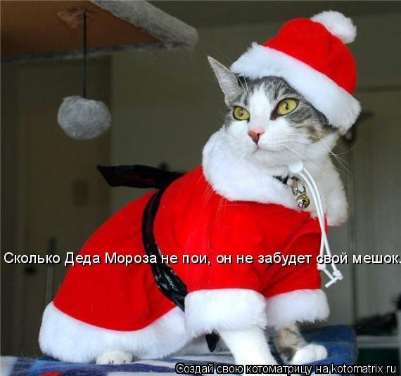 Котоматрица: Сколько Деда Мороза не пои, он не забудет свой мешок...