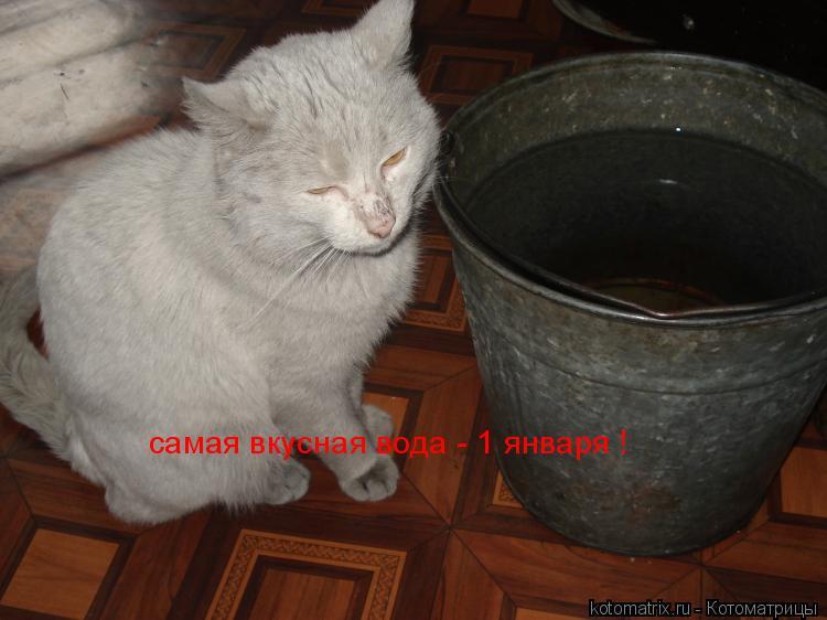 Котоматрица: самая вкусная вода - 1 января !