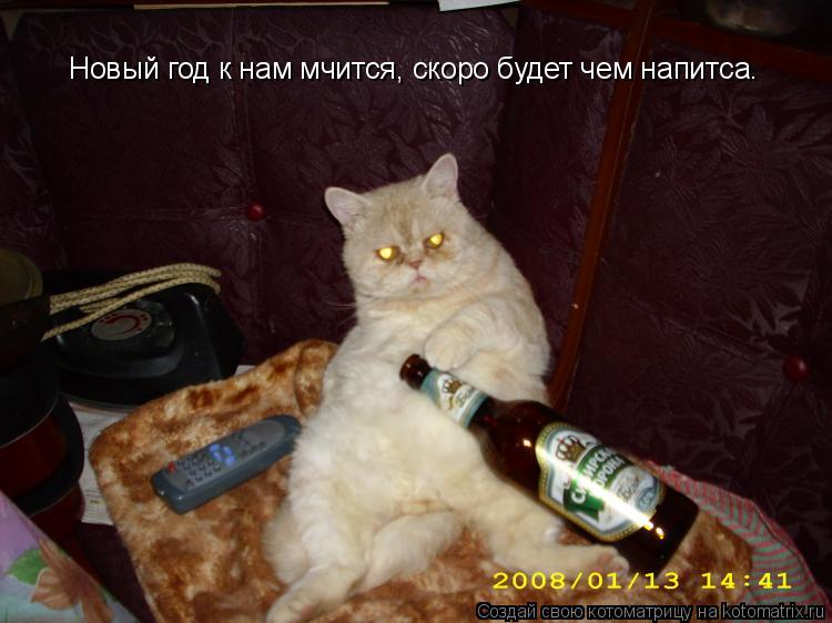 Котоматрица: Новый год к нам мчится, скоро будет чем напитcа.