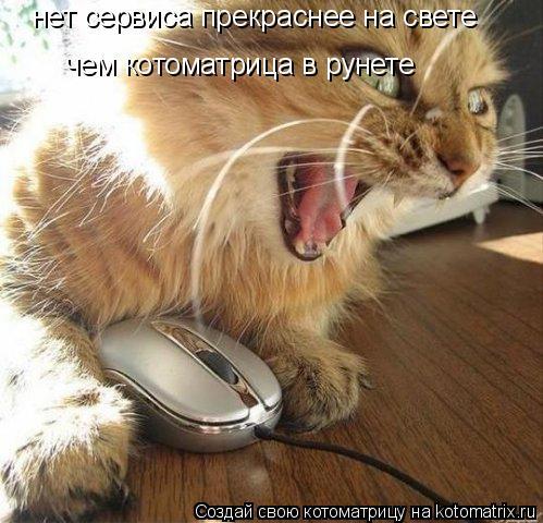 Котоматрица: нет сервиса прекраснее на свете чем котоматрица в рунете