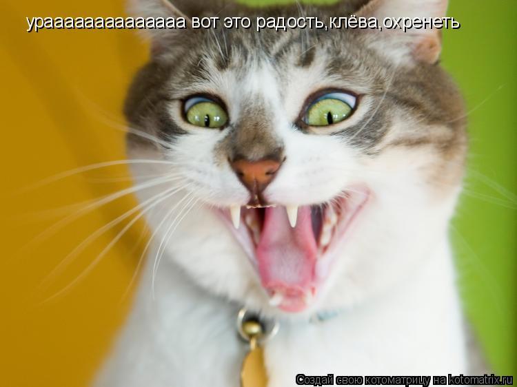 Котоматрица: ураааааааааааааа вот это радость,клёва,охренеть