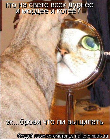 Котоматрица: кто на свете всех дурнее и мордее и котее? эх...брови что ли выщипать
