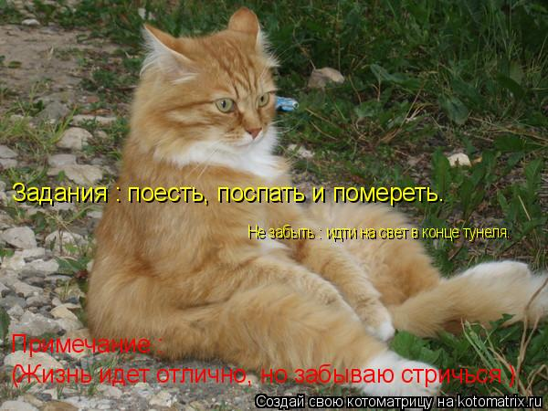 Котоматрица: (Жизнь идет отлично, но забываю стричься.) Примечание : Задания : поесть, поспать и помереть. Не забыть : идти на свет в конце тунеля.