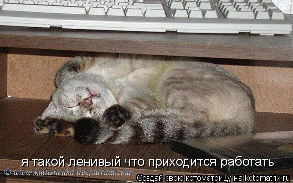 Котоматрица: я такой ленивый что приходится работать
