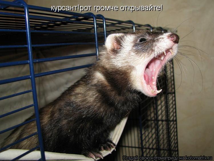 Котоматрица: курсант!рот громче открывайте!