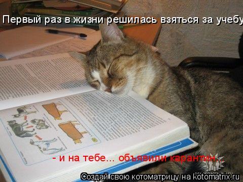 Котоматрица: Первый раз в жизни решилась взяться за учебу  - и на тебе... объявили карантин...