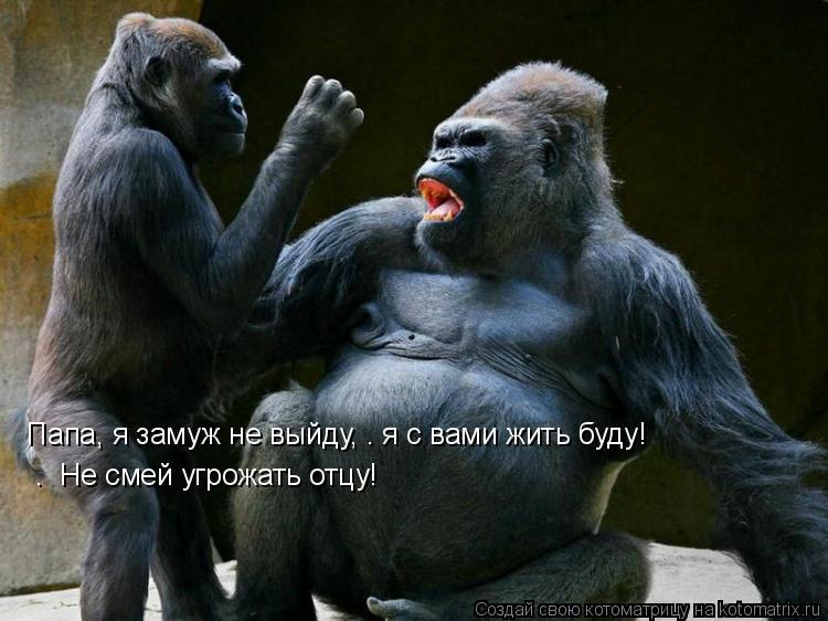 Котоматрица: «Папа, я замуж не выйду, — я с вами жить буду!»  — «Не смей угрожать отцу!»
