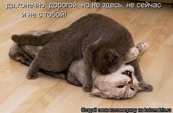 Котоматрица: да,конечно, дорогой, но не здесь, не сейчас и не с тобой!
