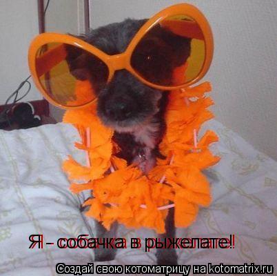 Котоматрица: Я - собачка в рыжелате! Я - собачка в рыжелате!