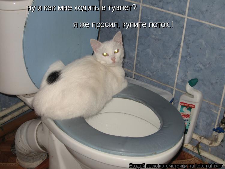 Котоматрица: ну и как мне ходить в туалет? я же просил, купите лоток.!