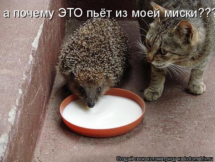Котоматрица: а почему ЭТО пьёт из моей миски????