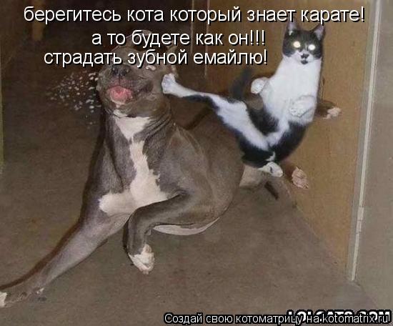 Котоматрица: берегитесь кота который знает карате! а то будете как он!!! страдать зубной емайлю!