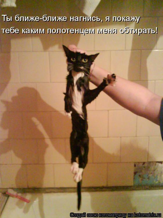Котоматрица: Ты ближе-ближе нагнись, я покажу тебе каким полотенцем меня обтирать!
