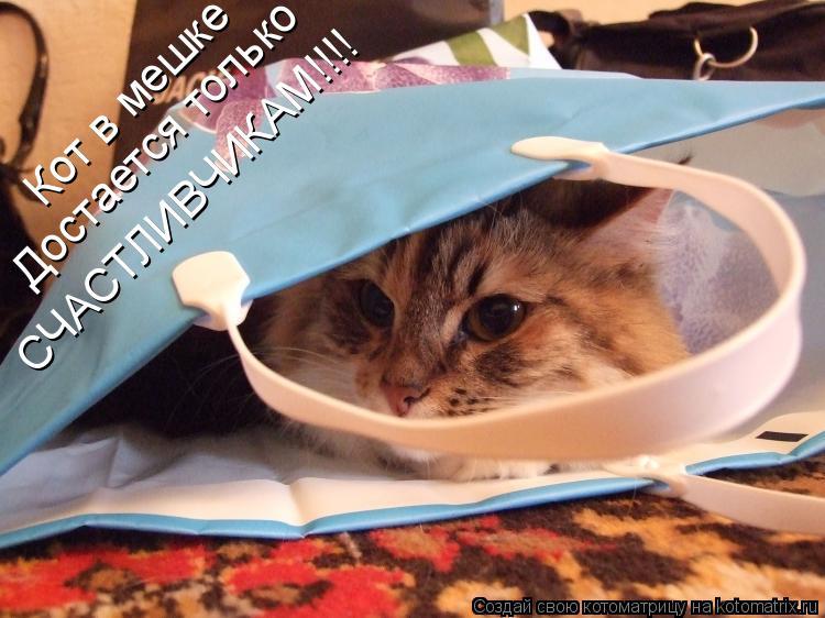 Котоматрица: Кот в мешке Достается только СЧАСТЛИВЧИКАМ!!!!