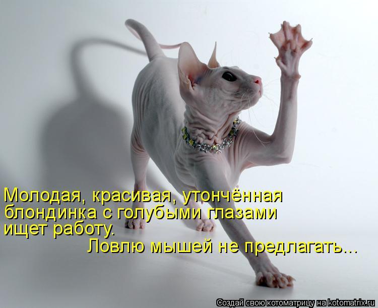 Котоматрица: Молодая, красивая, утончённая блондинка с голубыми глазами ищет работу.  Ловлю мышей не предлагать...